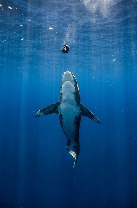 Beautiful Ocean Sharks