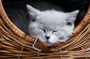 Balkonschutz Für Katzen : darf die katze mit im bett schlafen ~ Eleganceandgraceweddings.com Haus und Dekorationen
