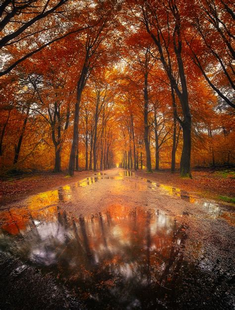 magical autumn forest  rijsterbos netherlands