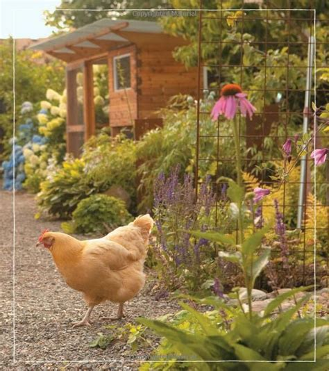 17 best images about chickens and garden stuff on