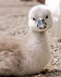 34 Super Cute A... Cute Animals