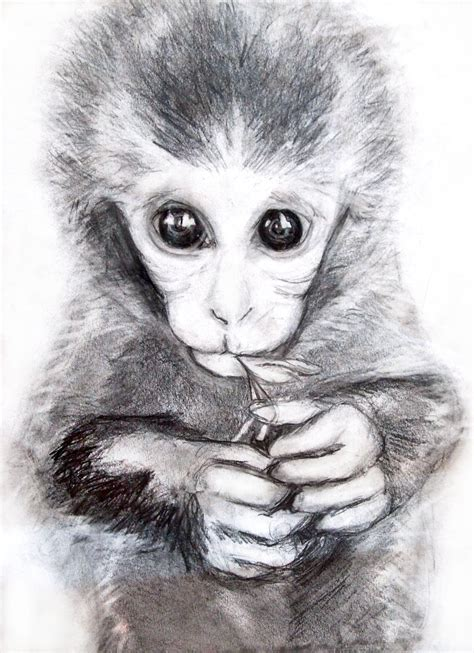 Best Monkey Drawing Ideas And Images On Bing Find What You Ll Love