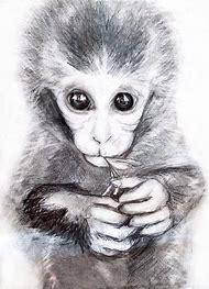Little Cute Monkey Drawings