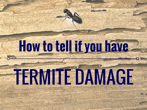 what to look for in a home how to tell if you have termite damage island pest control