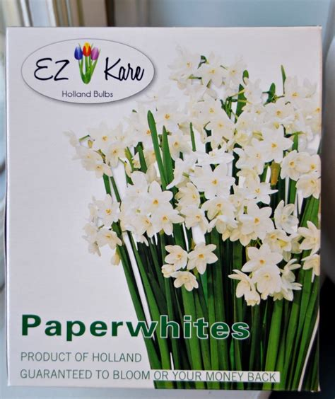 forcing paperwhites for paper white home