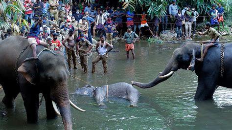 pregnant elephants death  india triggers hate campaign india news al jazeera