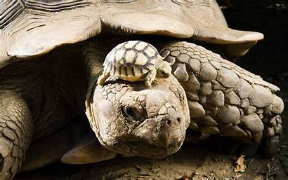 Turtles Wallpapers Reptiles Definition Subcategory Updated Views