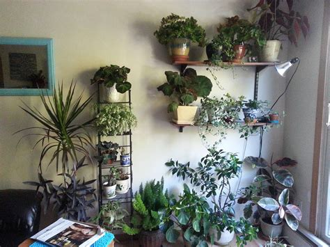 3 Sparkling Apartments That Shine With Wonderful White : Apartment Plants Ideas Best Plants For Apartment Air