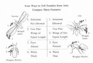 Termite Size Chart