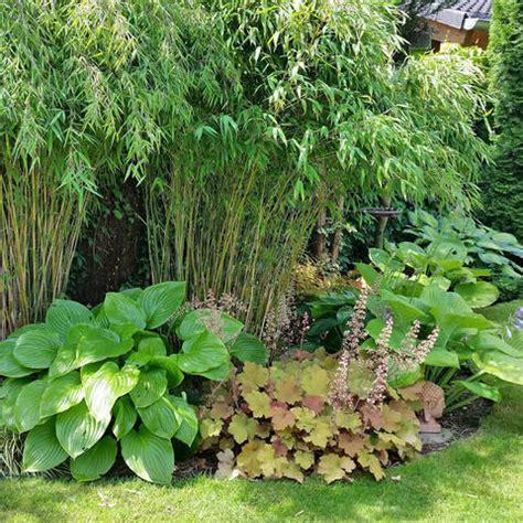 Garten Gestalten Bambus by Bambus Pflanzen Pflege Und Tipps Mein Sch 246 Ner Garten
