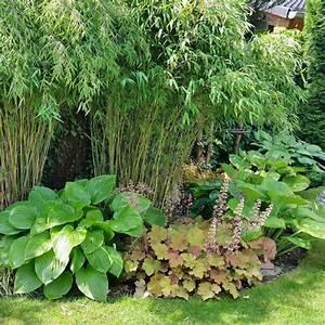 Was Passt Zu Bambus : bambus pflanzen pflege und tipps mein sch ner garten ~ Watch28wear.com Haus und Dekorationen