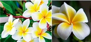 Top 10 Most Beautiful Flowers In The World 2017 - 2018 ...