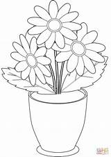 Flores Maceta Manzanilla Chamomile Fiori Disegni Mewarnai Macetas Melati Stokrotka Kolorowanka Supercoloring Druku Doniczce sketch template