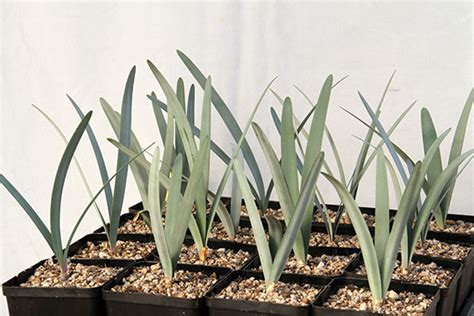 winter growers succulents nursery
