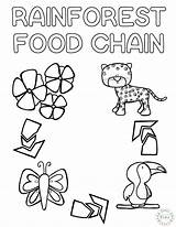 Chain Coloring Rainforest Craft 7th Sketchite Learn Teach sketch template