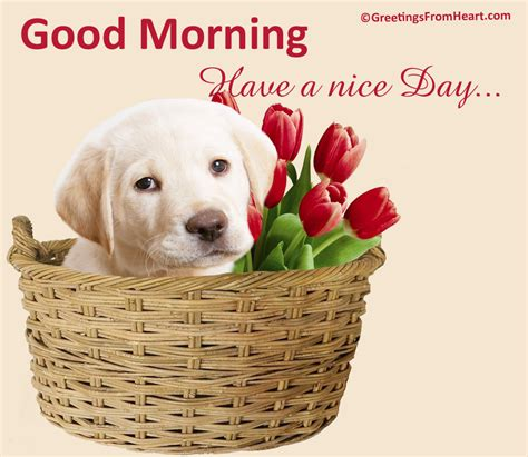 Good Morning Wishes With Dogs Pictures, Images  Page 4