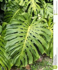 Plante Tropicale D Intérieur : les 10 meilleures images du tableau plantes vertes l 39 int rieur sur pinterest feuilles ~ Melissatoandfro.com Idées de Décoration