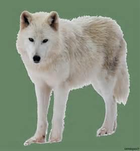 difference entre chien assis et lucarne difference entre chien assis et lucarne 28 images tout savoir sur la lucarne savoirs fen