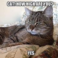 Super Funny Cat Memes