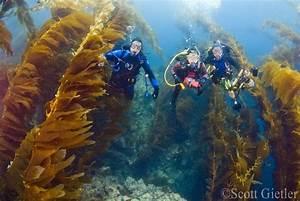 Underwater Photographer U0026 39 S Guide To Navigating The Kelp