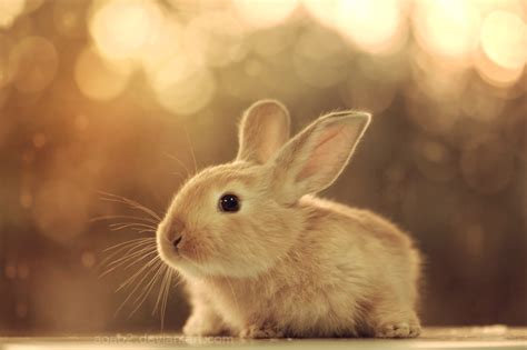 cute baby bunny  wallpaper wallpapers litle pups