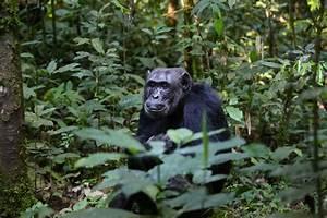 Latin America's Largest Primate Sanctuary – Curitiba In ...