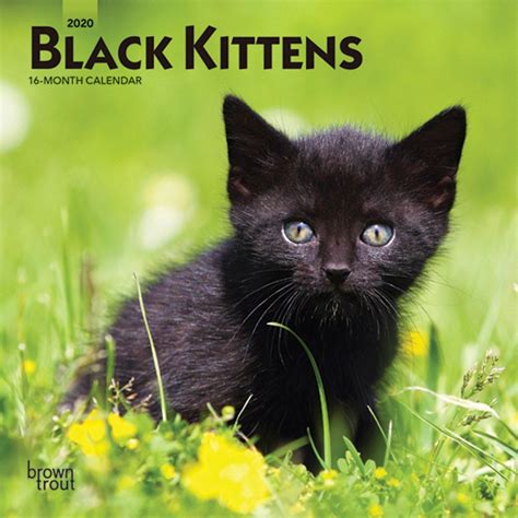 black kittens mini wall calendar