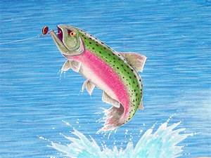 The gallery for --> Fish Jumping Out Of Water Drawing