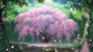 Anime Cherry Blossom Wallpaper - WallpaperSafari