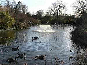 The Pond A Crowded Calendar Esports Insider