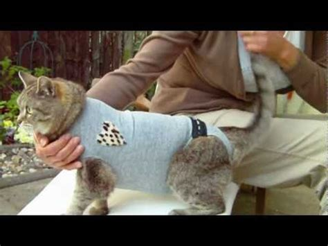 doggy sweater naehanleitung hundepulli massschnitt fuer