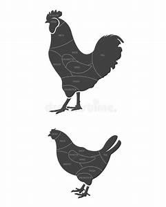 Chicken Meat Cuts Diagram Stock Vector  Illustration Of