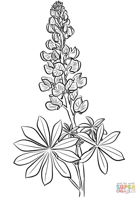 Lupine coloring page from Lupin category. Select from 27390 printable crafts of cartoons, nature