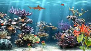 Animated Coral Reef Wallpaper - WallpaperSafari