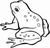 Frog Coloring Pages Animals sketch template
