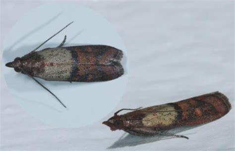 insectes cuisine insecte cuisine les ustensiles de cuisine