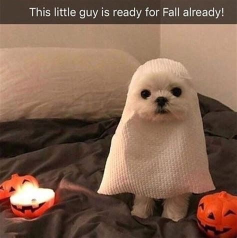 funny dog memes   week breakbrunch