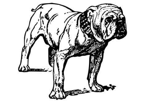 Amerikaanse Bulldog Kleurplaat by Kleurplaat Hond Bulldog Afb 18584 Images