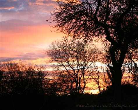 coucher de soleil sur des arbres fonds decran de