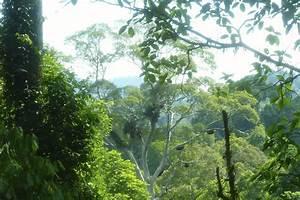 Into The Jungle – Danum Valley Primary Rainforest, Borneo ...