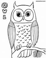 Owl Coloring Pages Branch Coloringway sketch template