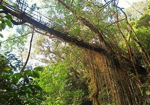 Living Root Bridge Project by Patrick Rogers « Inhabitat ...