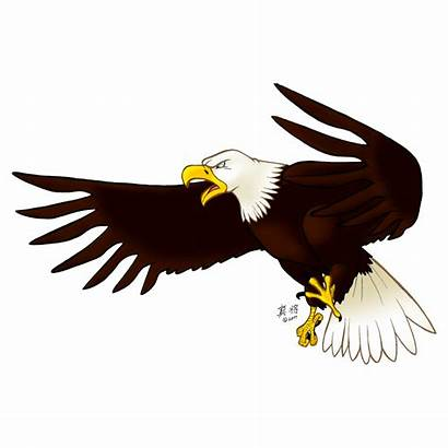 Eagle Transparent Bald Clipart Burung Aigle Clip