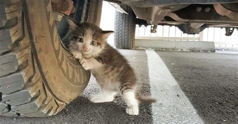 A Guy Found A Scared Kitten Under A Truck And Just Couldn