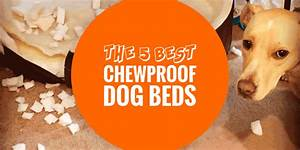 top 5 best chewproof dog beds aluminum pvc ballistic With best dog beds for puppies that chew