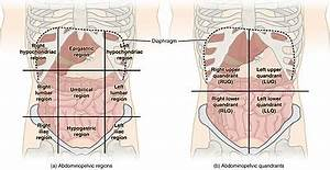 Belly Button Anatomy Navel Wikipedia – heritance.me