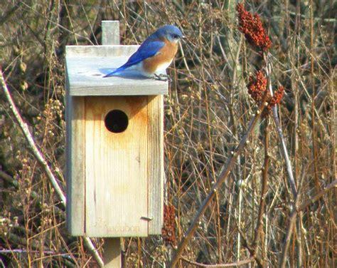 bluebird house 5