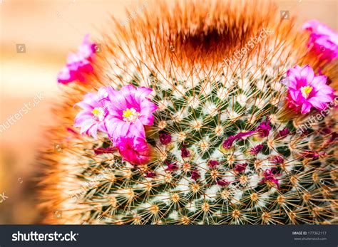 Cactus In Queen Sirikit Botanic Garden,Chiangmai Thailand ...