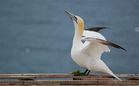 Ocean Birds Hd Desktop Wallpapers 4k Hd