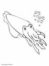 Coloring Sea Animals Pages Cuttlefish Ocean Printable Eel Sheets sketch template